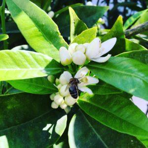 el silencio con abeja-Ana